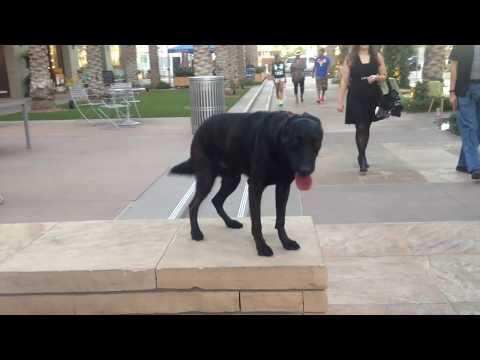 Dog Training Phoenix, Scottsdale, Arizona