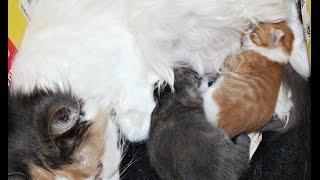 Как котята ведут себя во сне или что им снится?