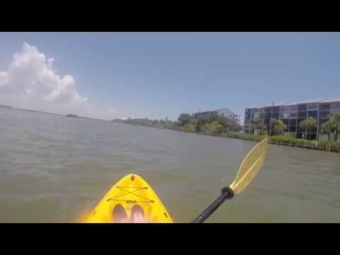 Kayaking With Dolphins New Smyrna Beach