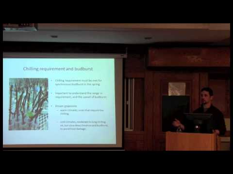 Variation in winter survival mechanisms of wild and cultivated grapevine