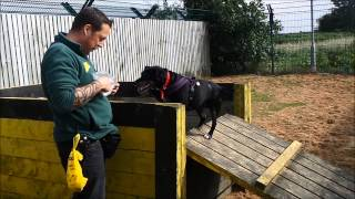 Dogs Trust Leeds: Sammy