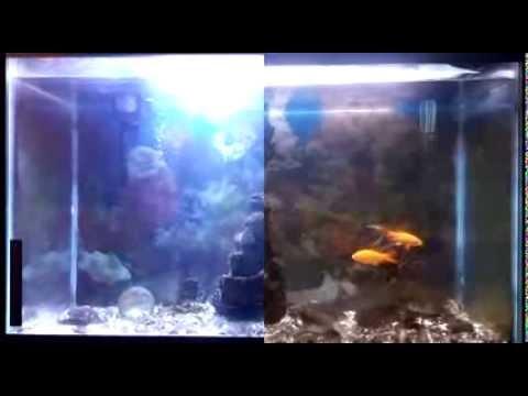 Zitrades 20w Aquarium Fish Tank Flood Light Review Youtube