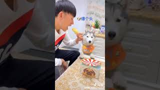 Dog Reaction to Cake Cutting || Funny video ||