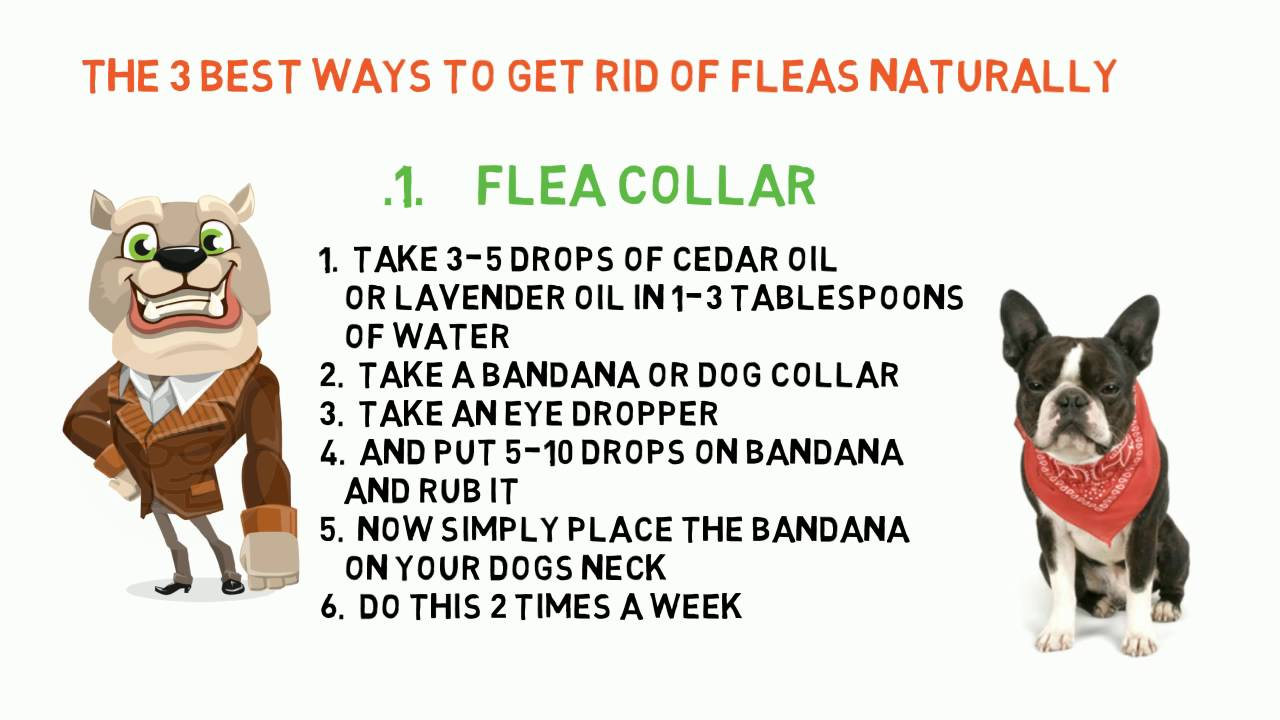 Top 3 Natural Ways To Get Rid Of Flea On Dogs Youtube