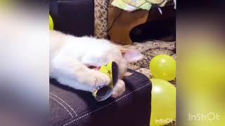 Кошачий день рождения 🥳 🐱🎁