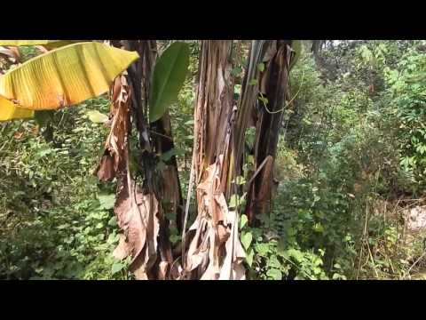 5 Year Old Food Forest in Florida: David The Good's Forest Garden Tour 2015