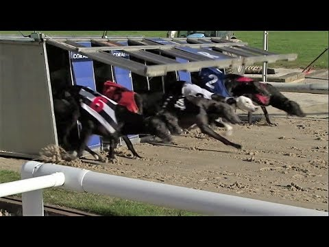 Greyhound Racing - Track
