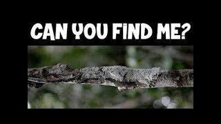 impossible || Find All The Hidden Animals | Optical Illusions | Brain Teasers || deficult || 2018