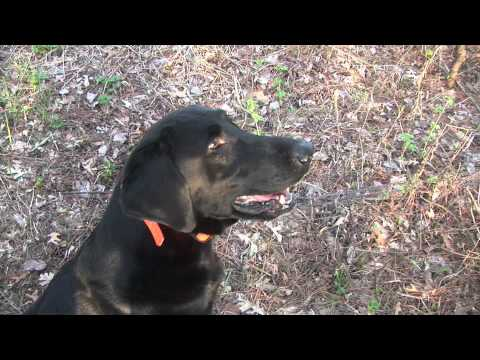Shed Hunting With Tom Dokken & Rookie
