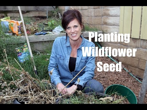 How to Plant Wildflower Seed for Early Spring Flowers