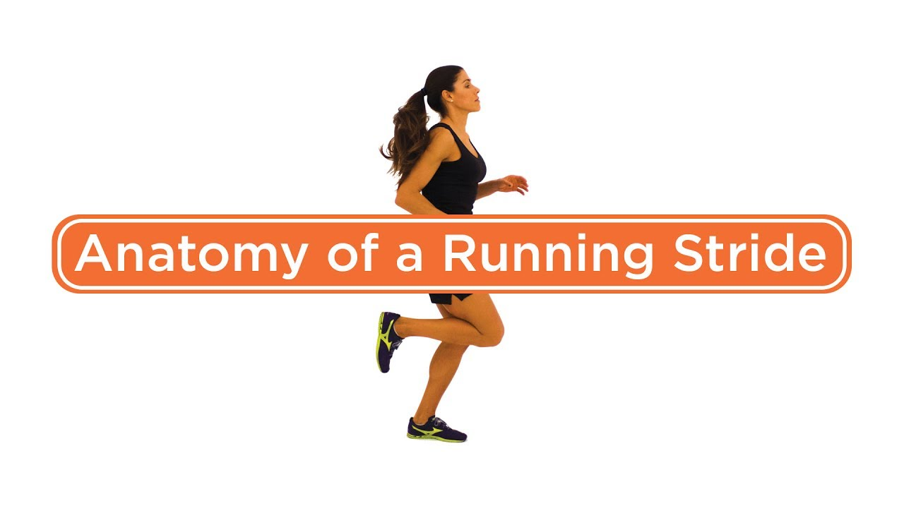 Anatomy of a Running Stride - YouTube