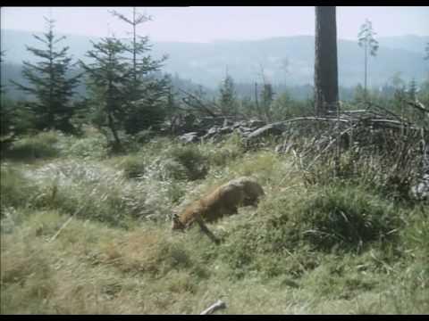 Pod Jezevčí Skálou - Gambol In Nature - Music By Luboš Sluka