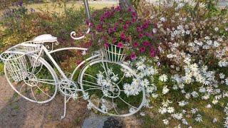 하은소정원 10월풍경/ 10월에도꽃은 많다  황금피라밋…