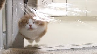 Invisible Wall Challenge vs Cats (ENG SUB)