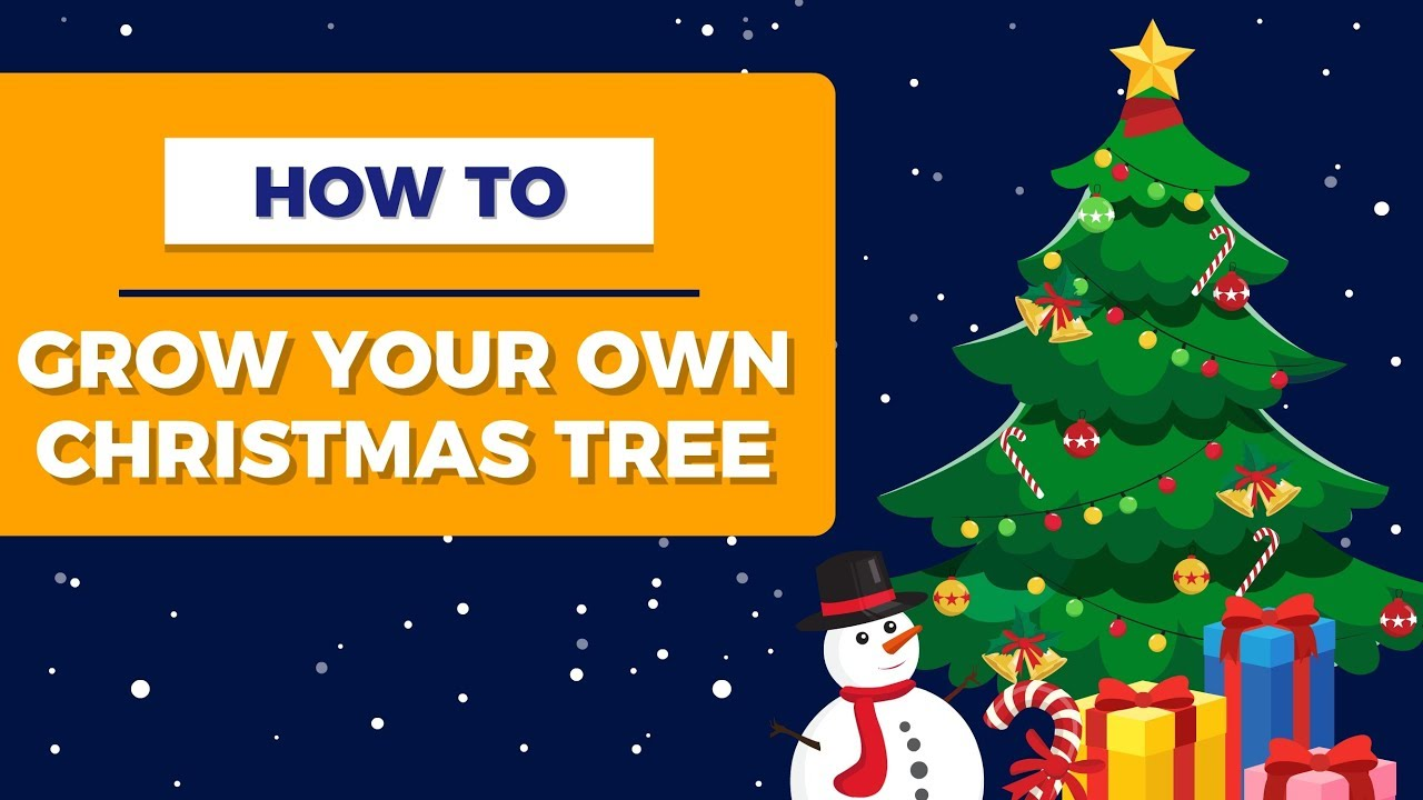 How to Grow Your Own Christmas Tree - YouTube