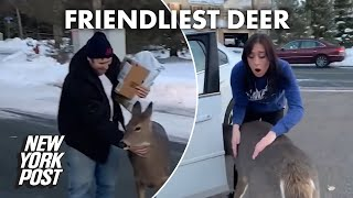Family's unexpected friend is near and 'deer' to their heart | New York Post