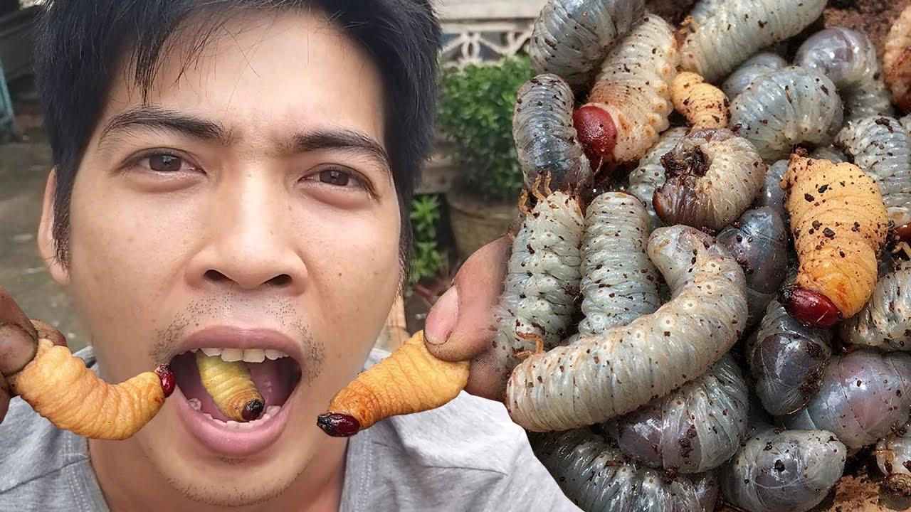 ASMR Đuông Dừa chắm Nước Mắm Ớt Cay #2497 asmr mukbang