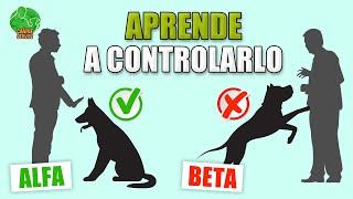 ENTRENAMIENTO de LIDERAZGO para PERROS (Cachorro y Adultos)