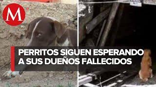Perritos esperan afuera de mina a trabajadores que fallecieron en accidente de Múzquiz