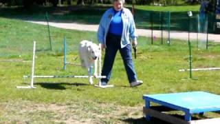 Muskoka District Kennel Club Agility Demonstration