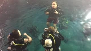DiveMania Scuba Pool Session - Monday 20 Feb 2017