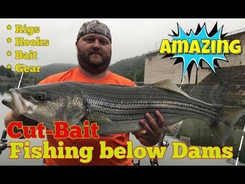 Cut-Bait Stripers Below Dams - How To Catch Stripers Using Cut-Bait Below Dams