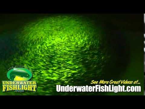 Huge Baitfish School Blacks Out Underwater Fishing Light