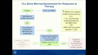 B Cell Chronic Lymphocytic Leukemia: Strategies for Diagnosis, Prognosis, and Response to Therapy