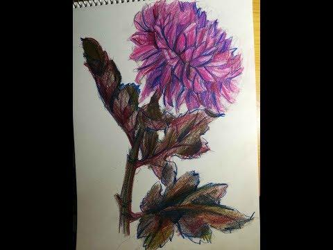 Рисуем хризантему. Вначале рисунок, затем заполняем цветом