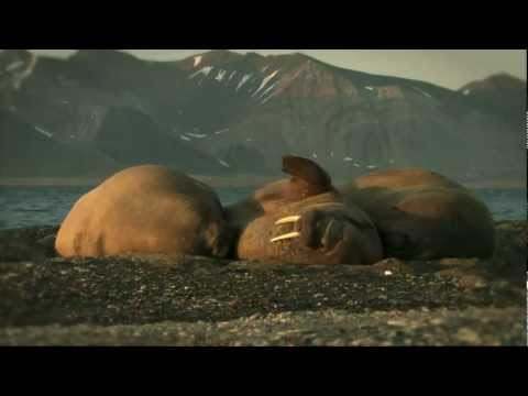 Thomas D • Gebet an den Planet 11.0 Original Videoclip