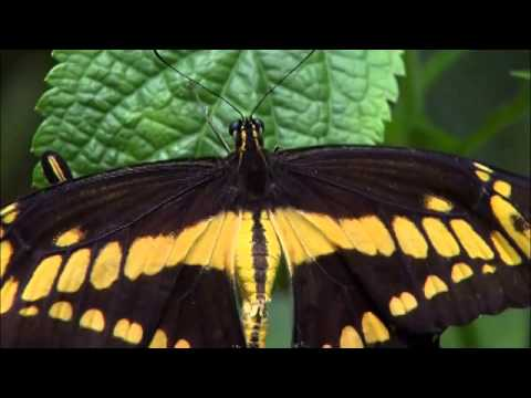 The Birds and The Bees - Other Pollinators -