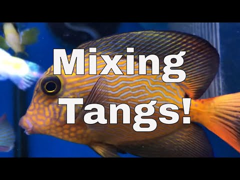 How To Mix Multiple Tangs In One Tank