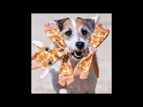 jolly-pets-animal-flathead-dog-toys