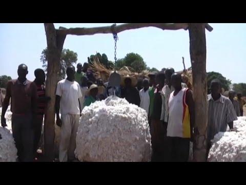 Togo, Relance de la filière cotonnière