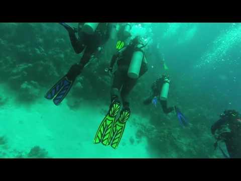 SCUBA DIVING IN BAHAMAS -- WALL DIVE -- STUART'S COVE // FULL DIVE