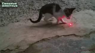 Маленький смешной котенок против лазерной указкой   Кошки Играя с лазерной точки