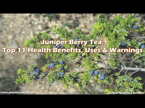 Juniper Berry Tea: Top 11 Health Benefits, Uses & Warnings