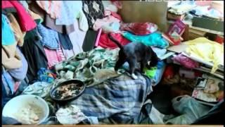 Собрала в квартире мусор и кошек