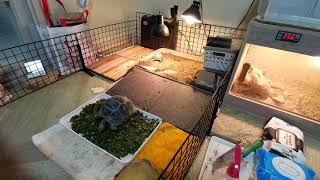 육지거북(tortoise)