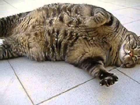 fur balls cat weight loss