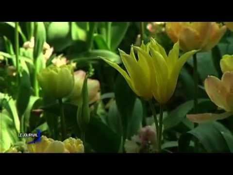 Saint-Cyr-en-Talmondais : Le Parc floral de la Cour d'Aron