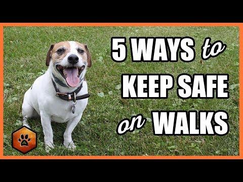Walking a Dog - 5 Ways to Keep Safe With Situational Awareness