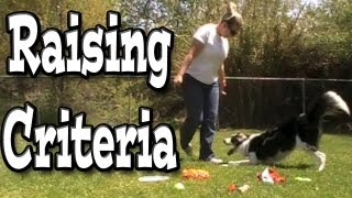 Raising Criteria - Clicker Dog Training
