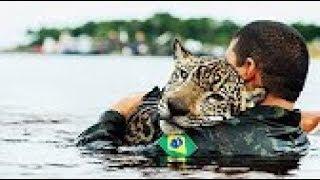 חיות מצילות חיים של בני אדם !!!! (מרגש עד דמעות ) !!!! ונדיר ביותר !!!