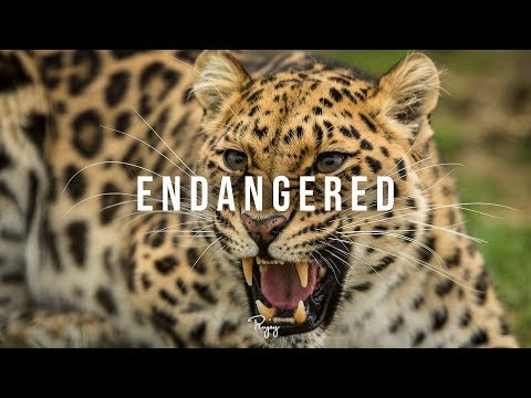 """Endangered"" - Dark Bass Rap Beat 