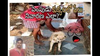 పెంపుడు కుక్కల్లో పేలు నివారణ//aqua planet telugu//Dog care//dog lice treatment