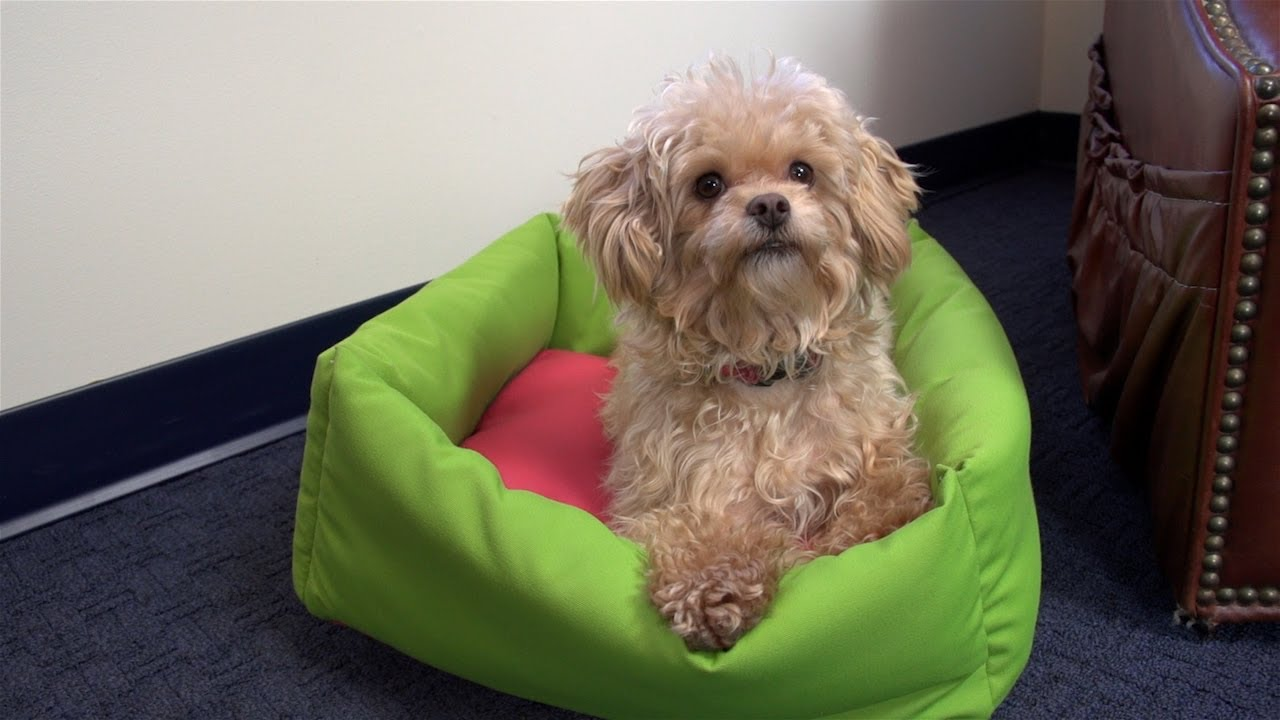 How to Make a Dog Bed - YouTube