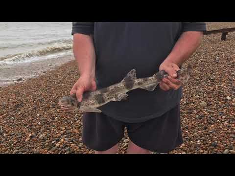 Fishing Deal Beach 24th May 2020