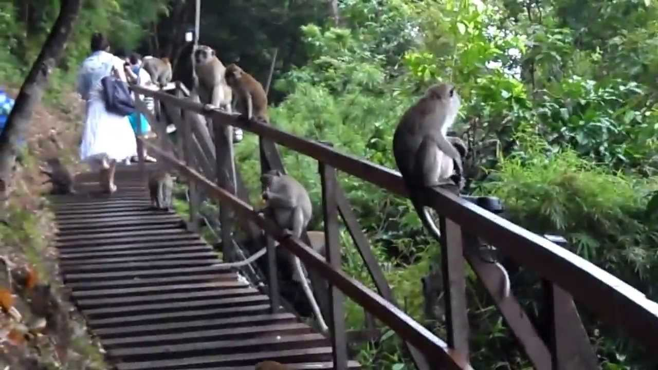Centara Monkey Trail Ao Nang Krabi - YouTube