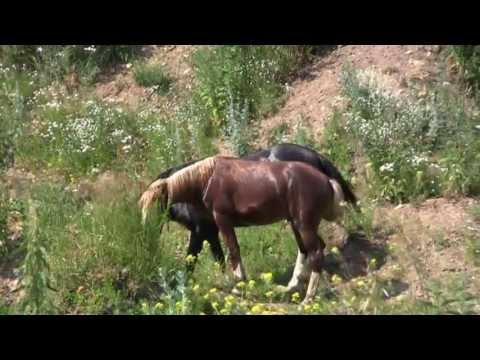 Фермер Бухаровский. Лошади в хозяйстве, боевые бактерии и теория БП